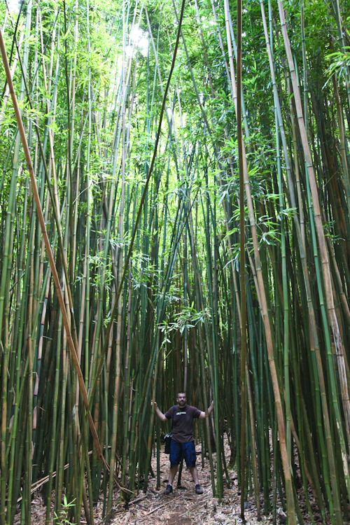 AJ in the bamboo forest. jpg