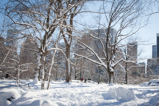 New York City's Central Park covered in snow. By Irvin Lin of Eat the Love. www.eatthelove.com