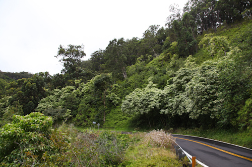 The scenery starts to get lush as you drive off from Paia on the Road to Hana. jpg