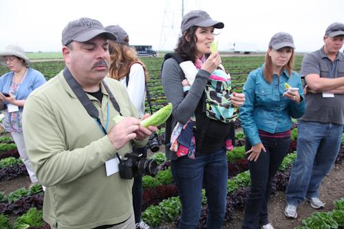 Bloggers eating lettuce fresh from the ground. jpg