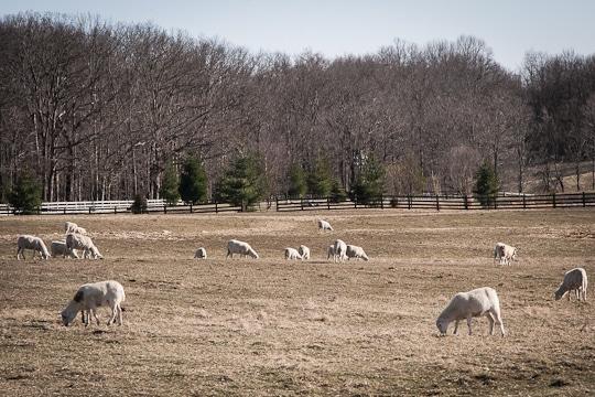 Murphy-Ridge-Inn-Ohio-Amish-Country