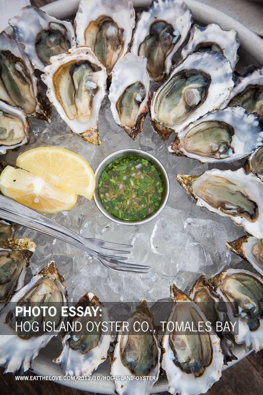 Photo Essay: Hog Island Oyster Co., Tomales Bay
