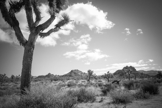 Joshua Tree National Park, California. Photo by Irvin Lin of Eat the Love. www.eatthelove.com
