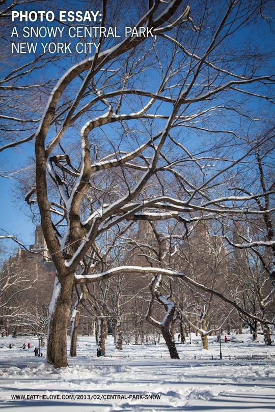 Photo Essay: A Snowy Central Park, New York City