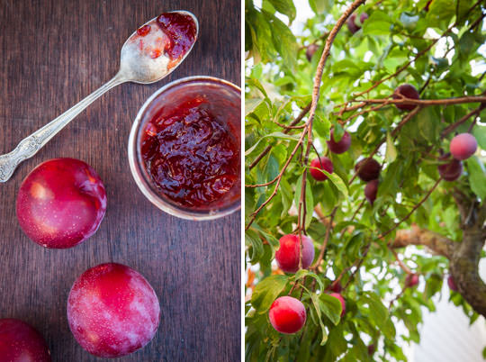 How to make plum jam. Photo and recipe by Irvin Lin of Eat the Love.