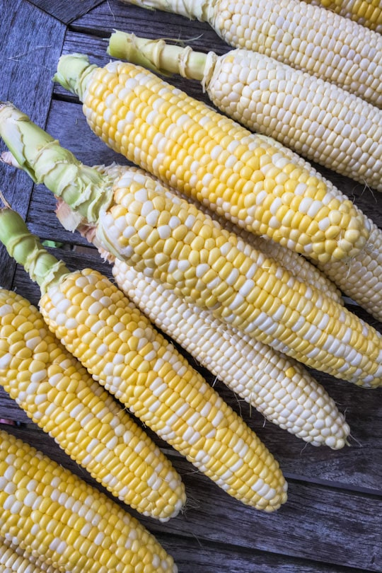 Midwest corn.