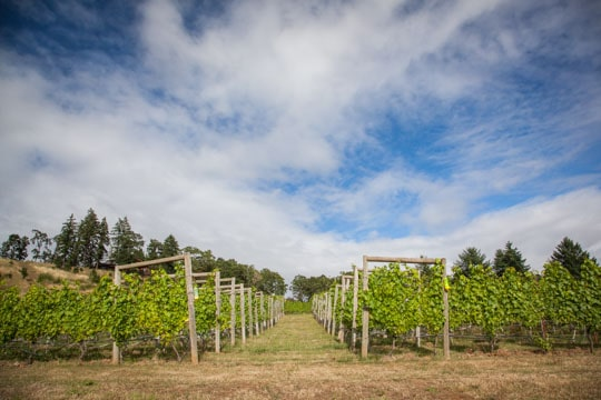 Coeur de Terre Vineyards