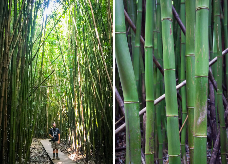 Hiking the bamboo forest.
